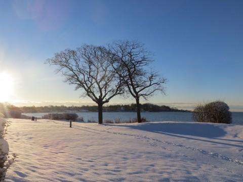 Sydlig Vintermorgen