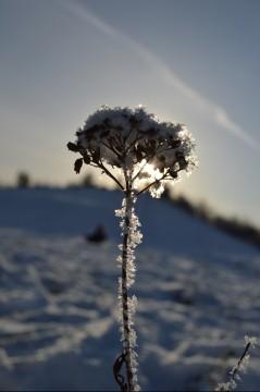 En dejlig vinterdag