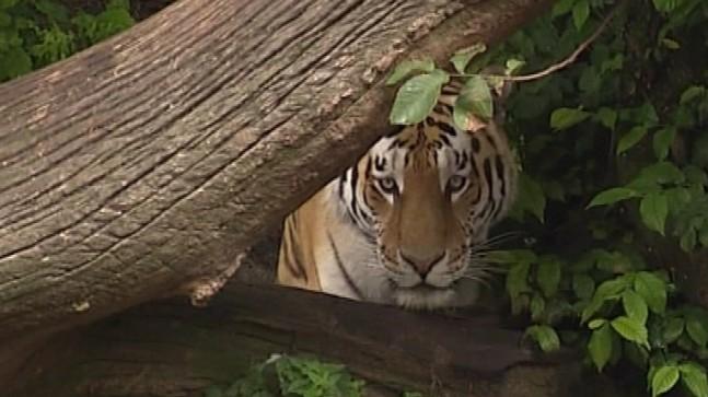 Tidligere ulykker i zoologiske haver   Nyhederne