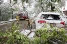 Galleri: Usædvanlig snestorm vælter træer på stribe i Calgary den 10/9 2014